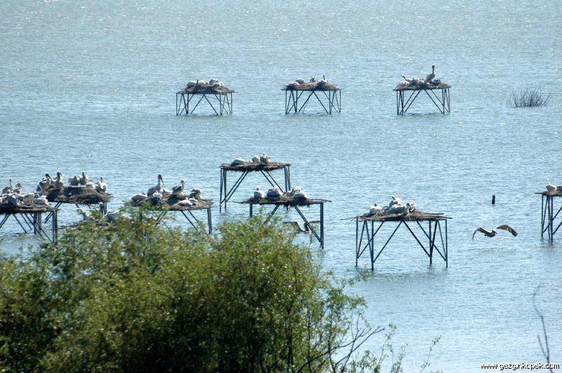 Manyas Pelikanlar